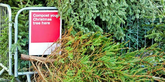 Reciclaje de árboles de Navidad