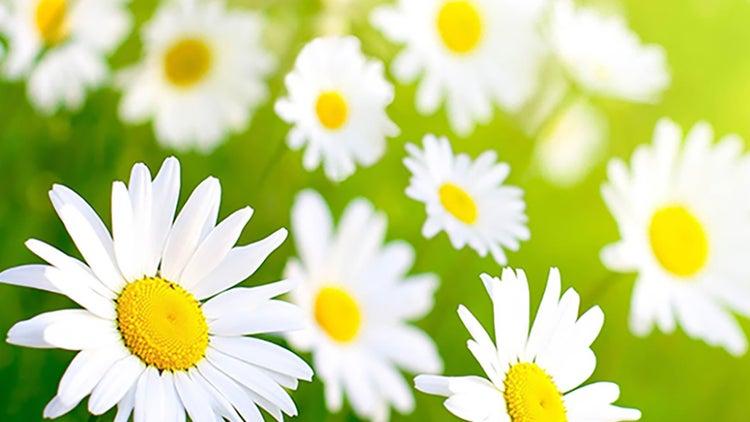 10 frases motivadoras para esta primavera