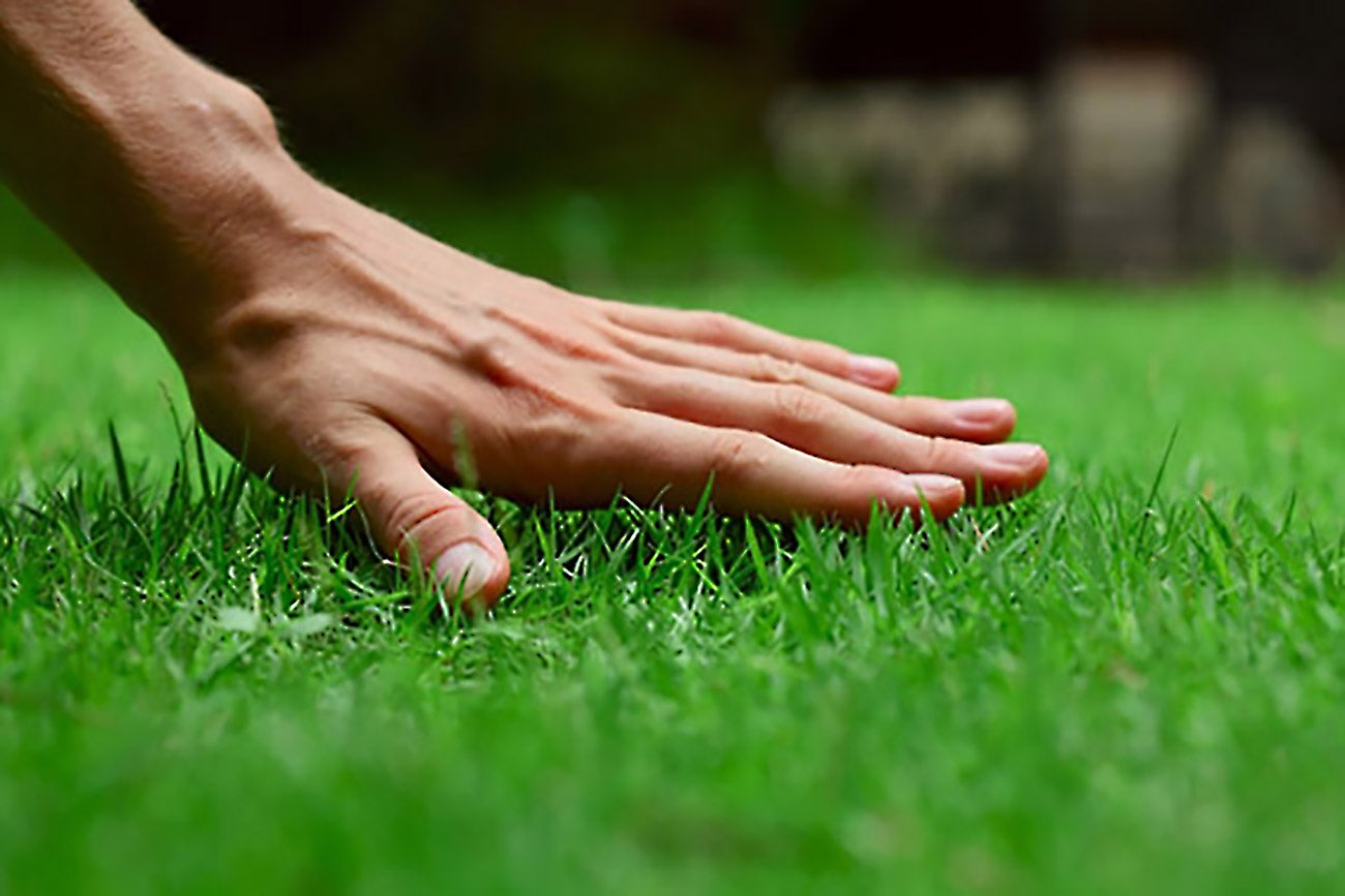 How to start a lawn care or landscaping business for Garden care