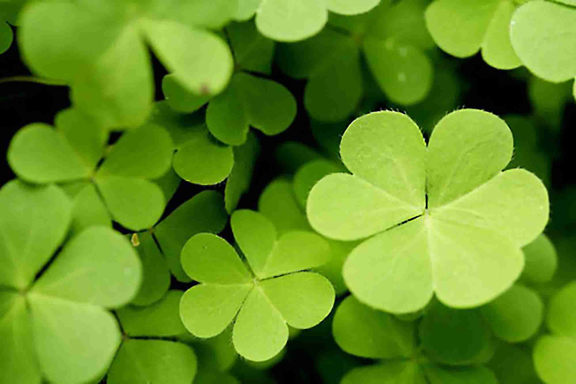 Make the Luck You Need to Succeed in Business