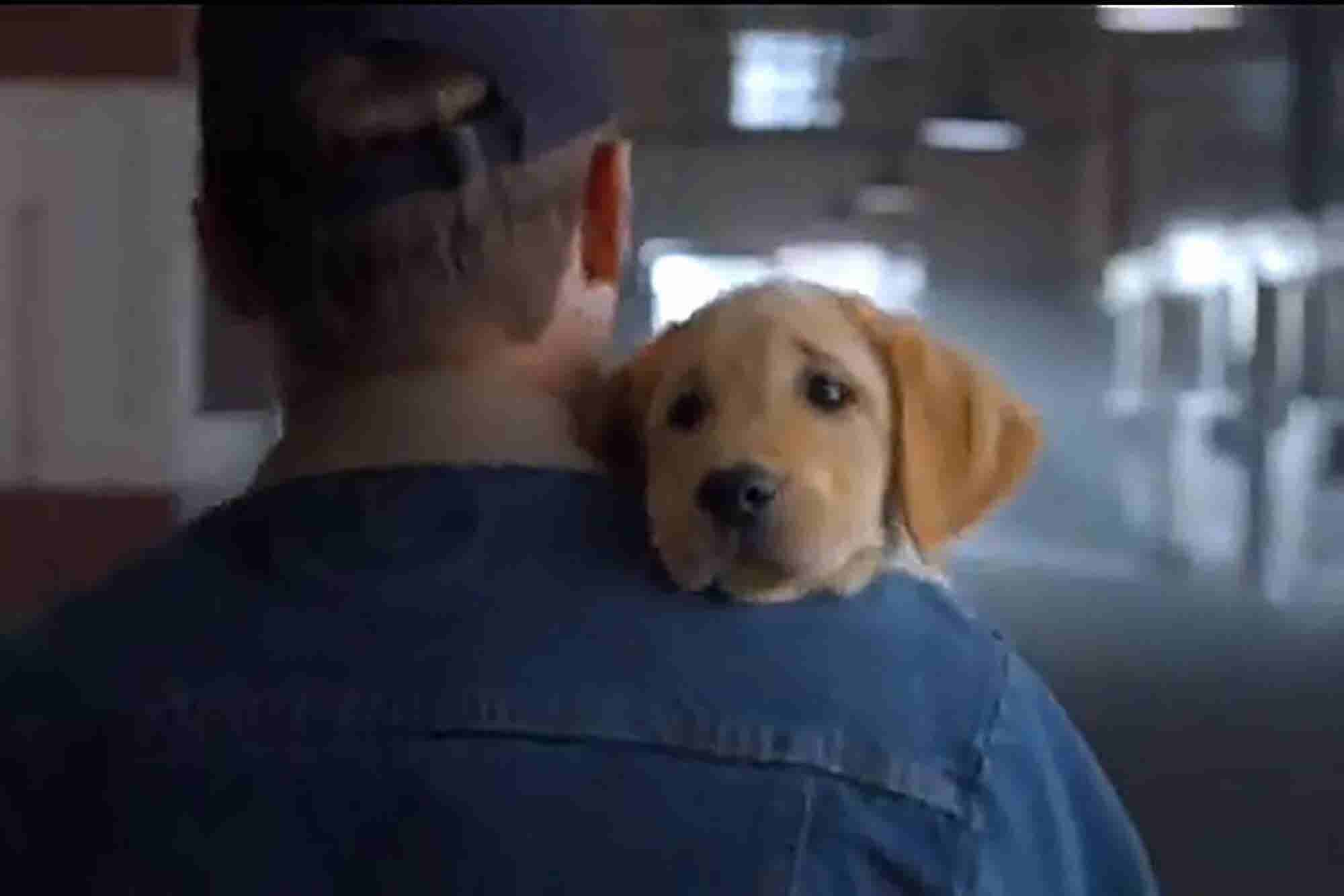 Poll: What Was Your Favorite Super Bowl Commercial?