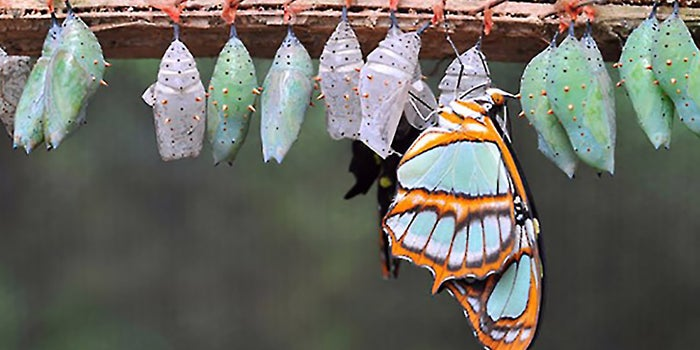How to Be Successful by Embracing Change