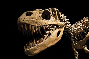 Don't Be a Content Marketing Dinosaur -- 5 Must-Haves to Stay Current