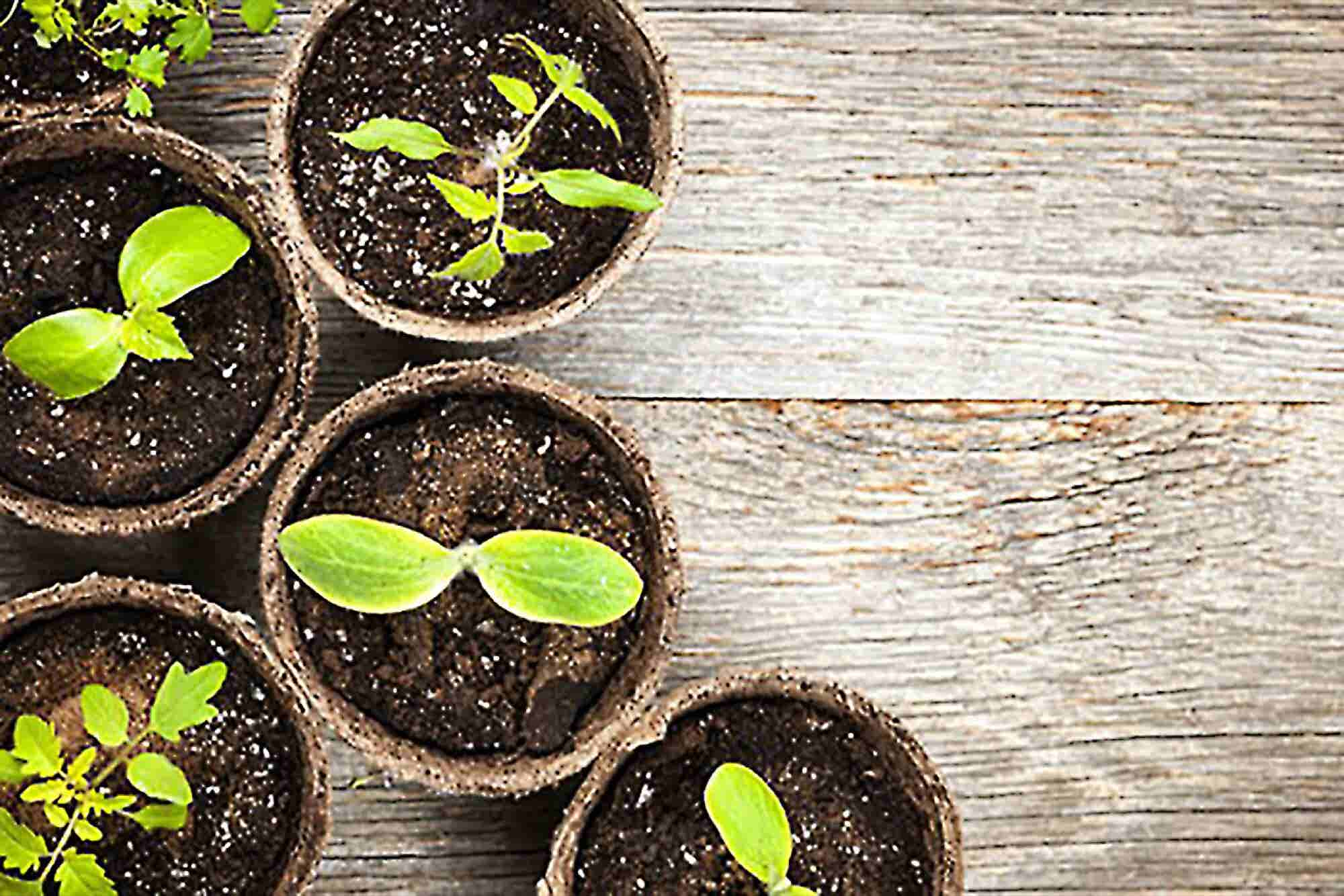 Sustainability Can Be Profitable, Too