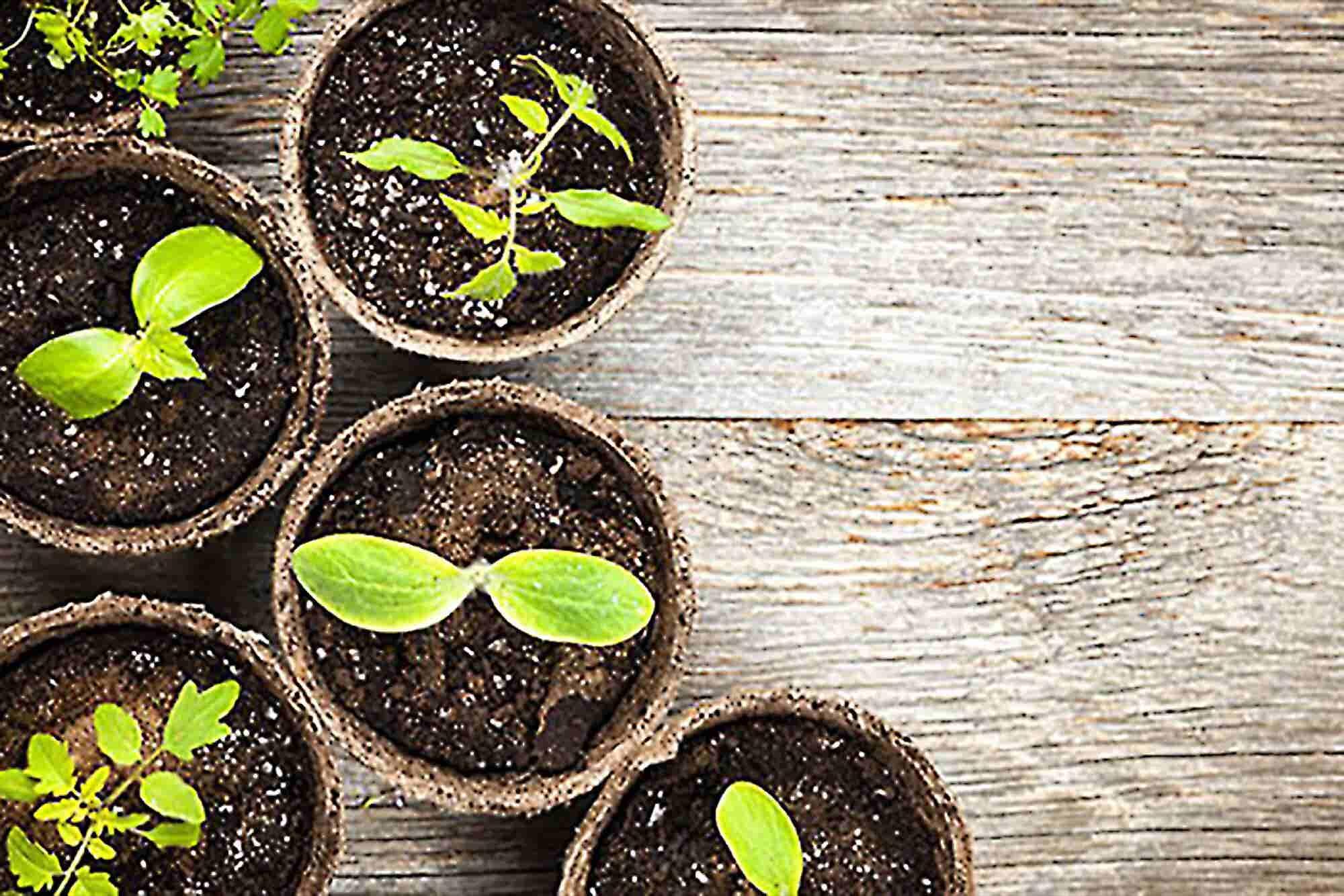 Nurturing Healthy Company Culture Can Yield Unpredictable Benefits