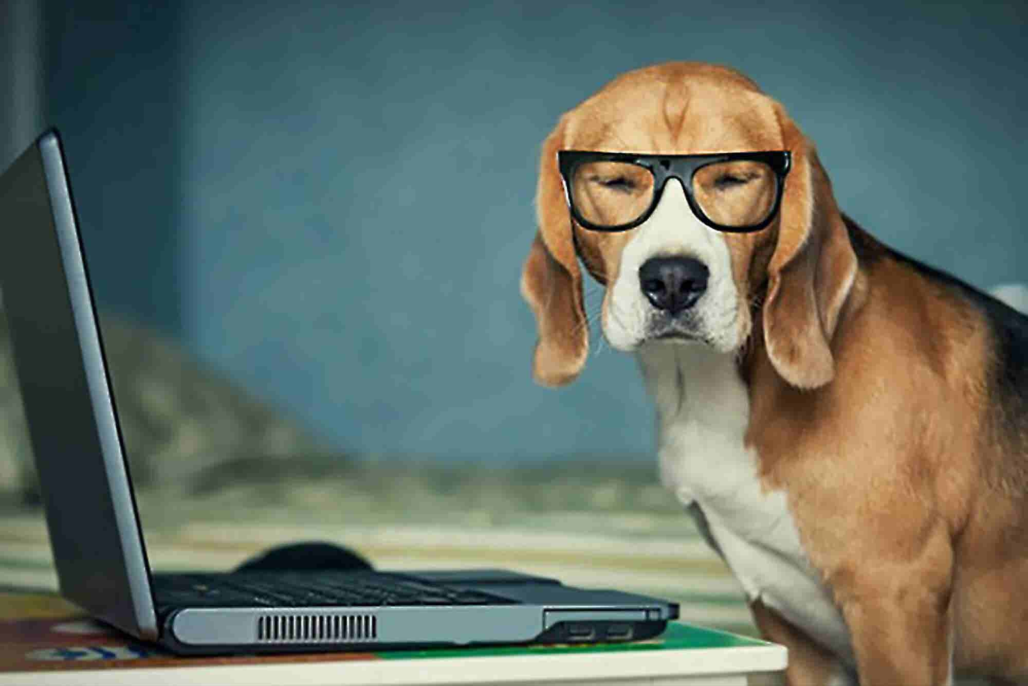 For a Productive Workplace Let Your Office Go to the Dogs
