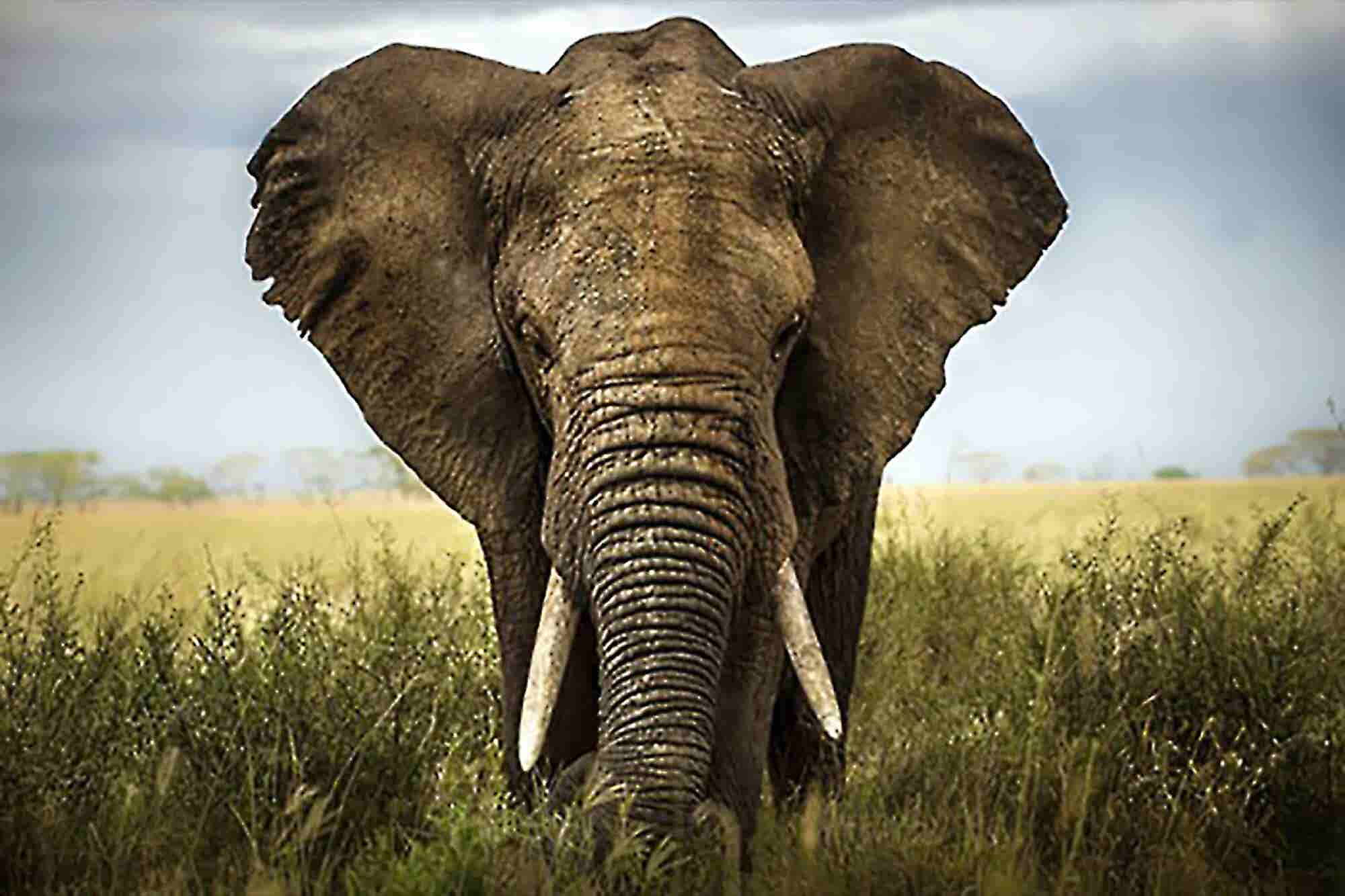 Great CEOs Deal With 'Elephants' First