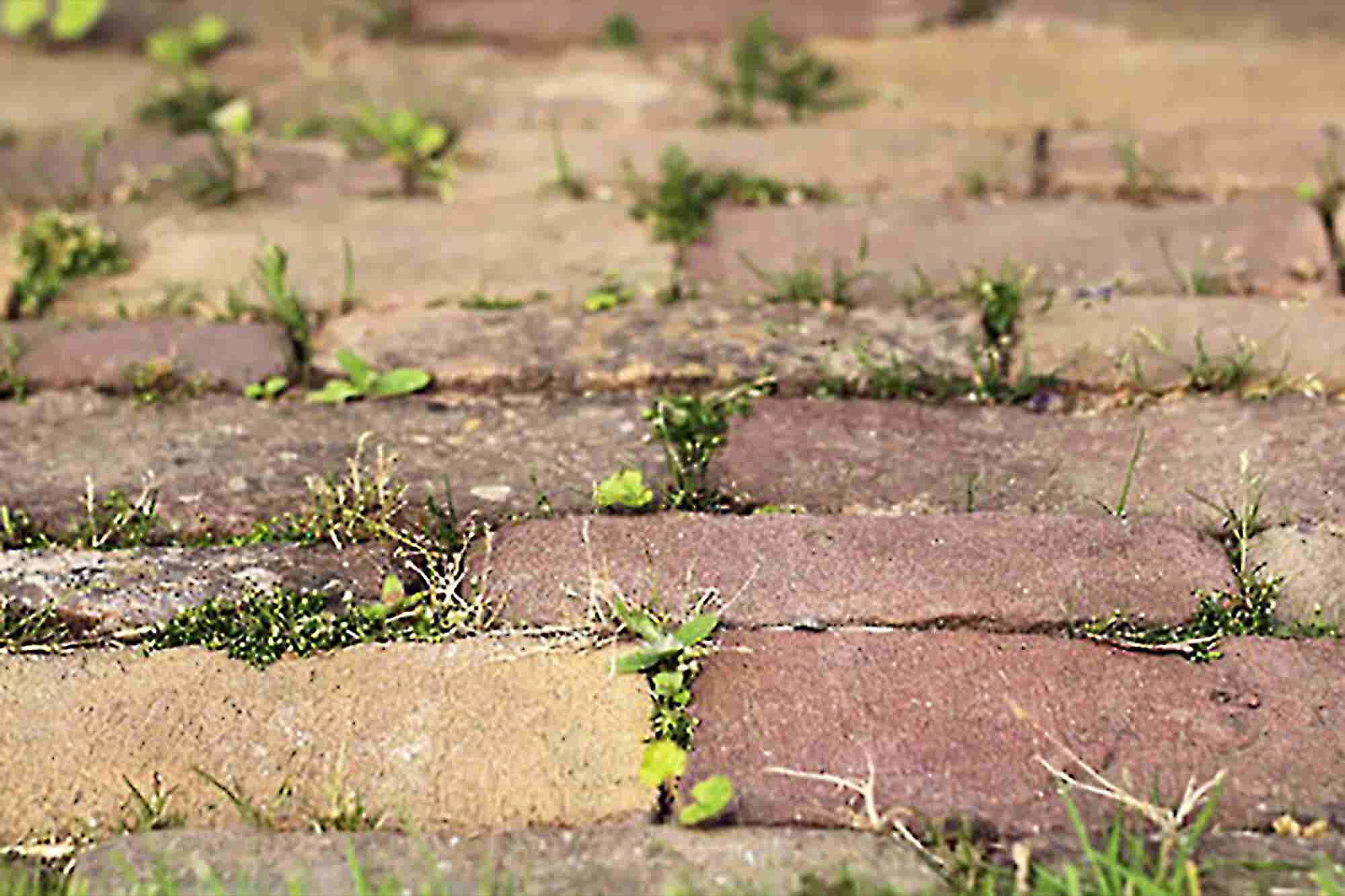 3 Tips to Keep Entrepreneurs Out of the Weeds