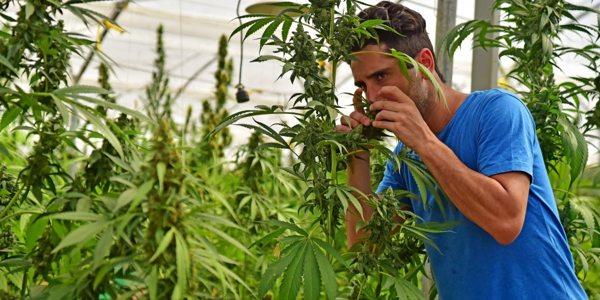Free On-Demand Webinar: The 5 Best Ways To Brand Yourself In the Cannabis Space