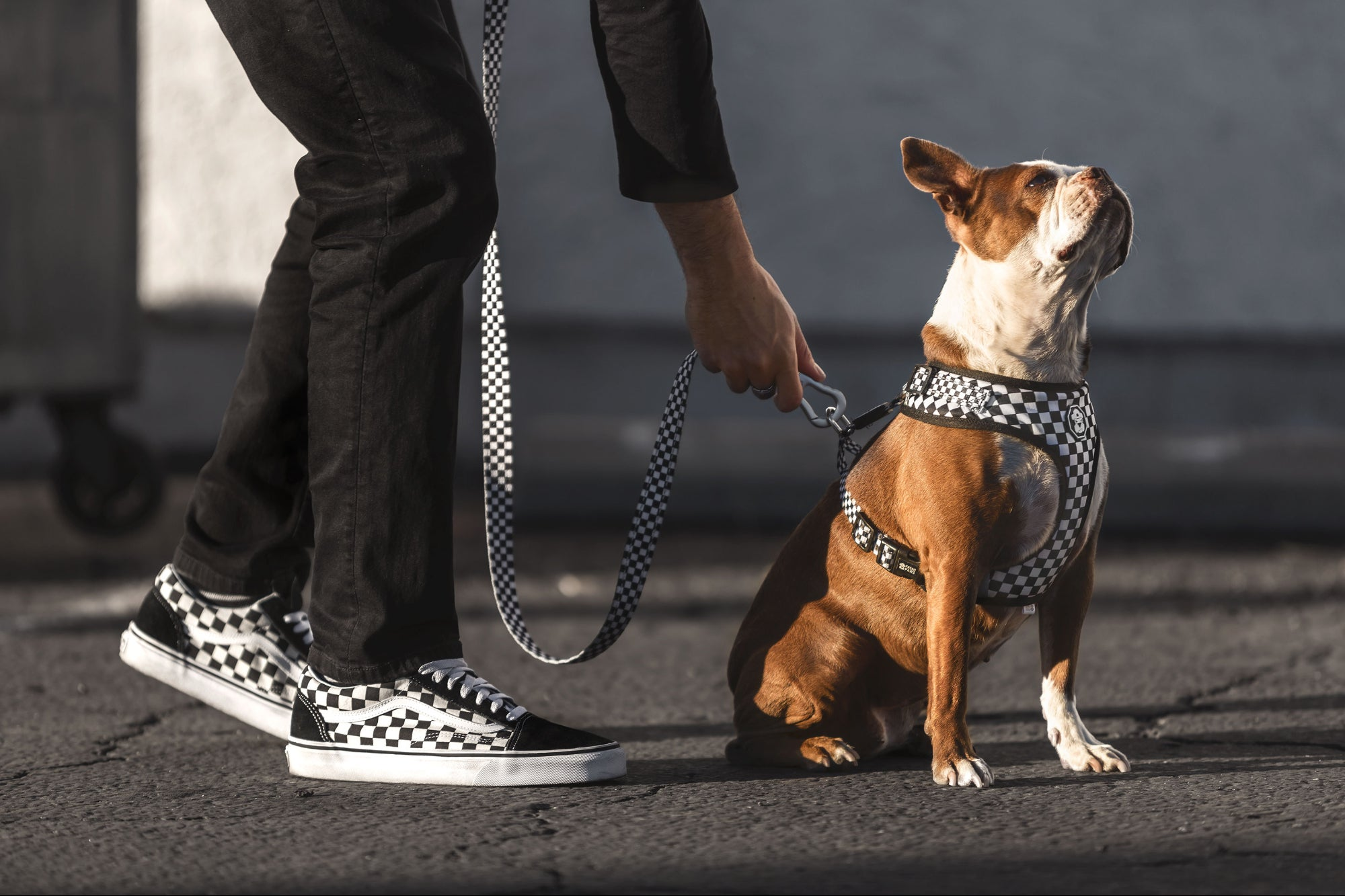 Streetwear Culture Goes to the Dogs