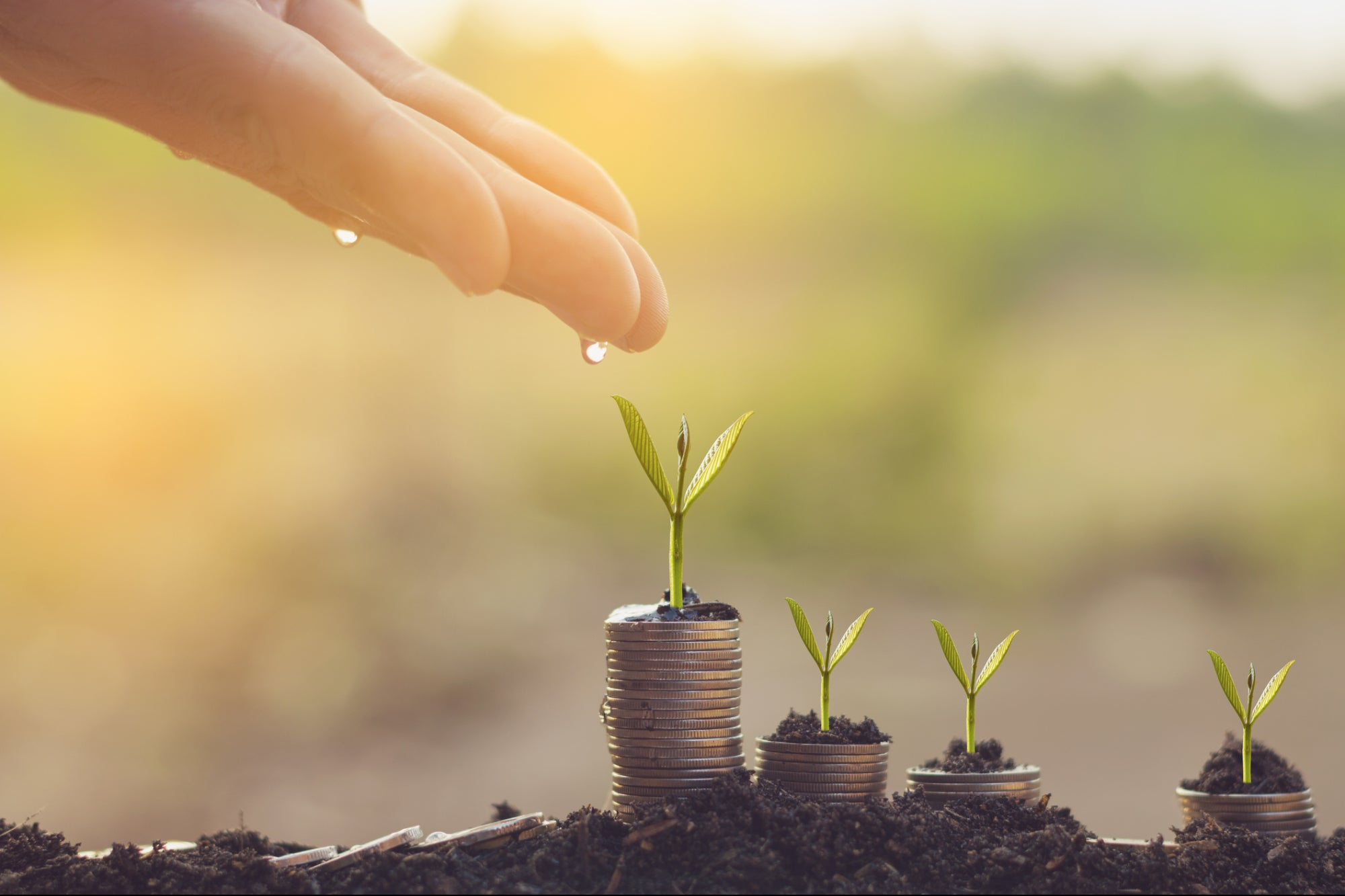 Seed, Sow, Water, Grow: 4 Expert Tips to Secure Angel Investment for Your New Business Venture
