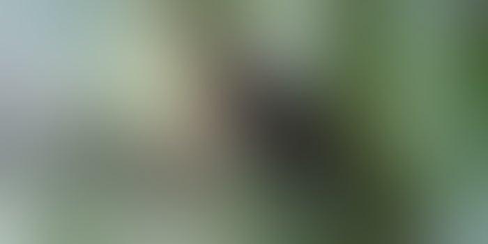 თოკების პარკი – თეთრიწყაროს LAG-ის მიერ დაფინანსებულმა ატრაქციამ რეგიონს ახალი სიცოცხლე შემატა