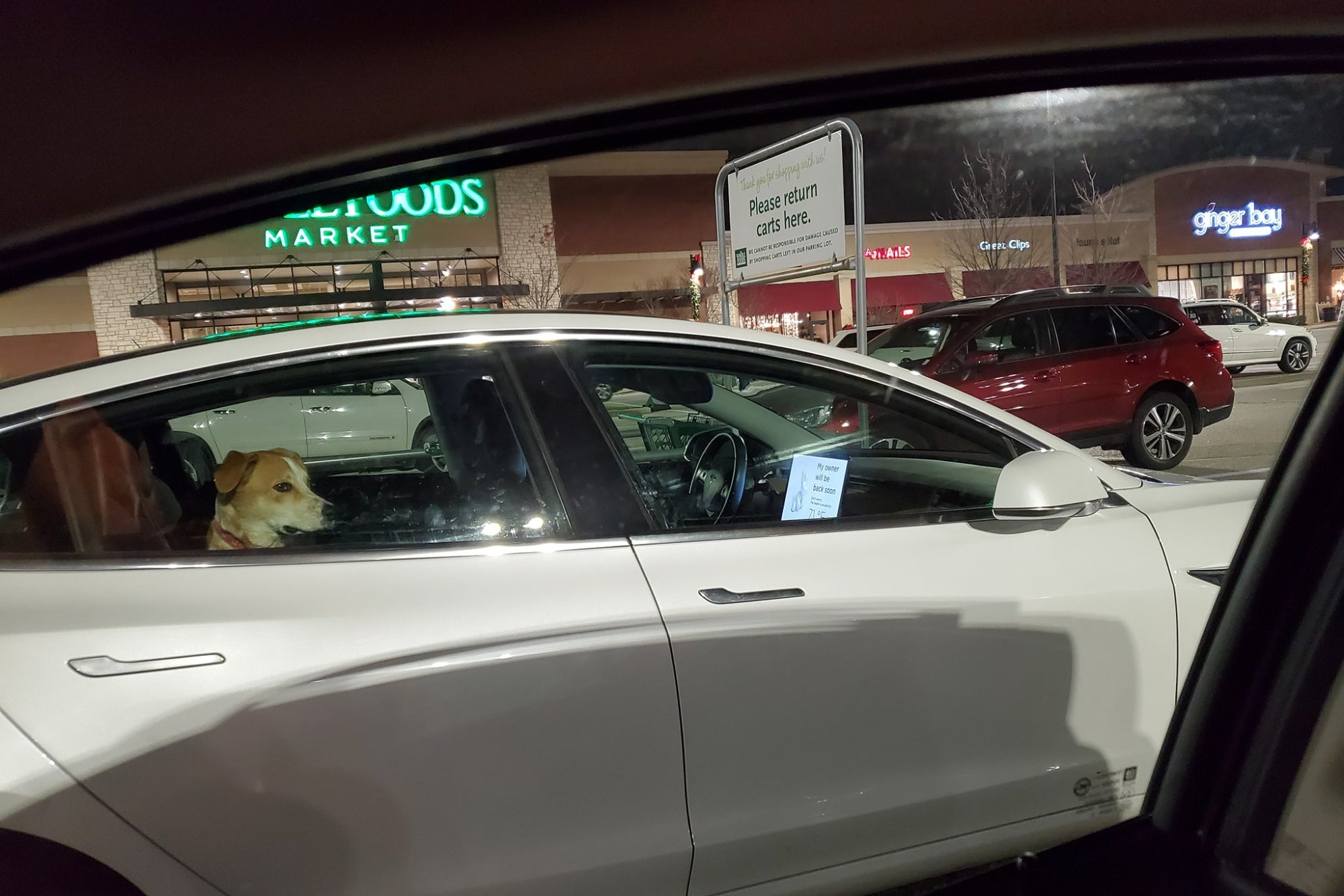 "Tesla vehicles have a ""Dog Mode"" function and this is the photo that left users shocked"