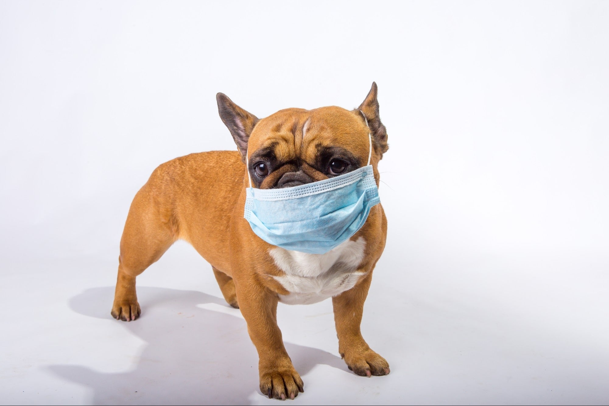 3 Puppies Tested Positive for Covid in Mexico; They Were Infected By Their Owners