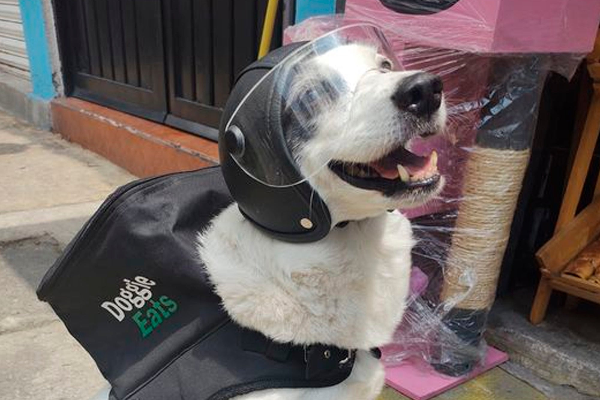 Meet Any, the 'Doggie Eats' delivery dog who works to help a tenderloin shelter