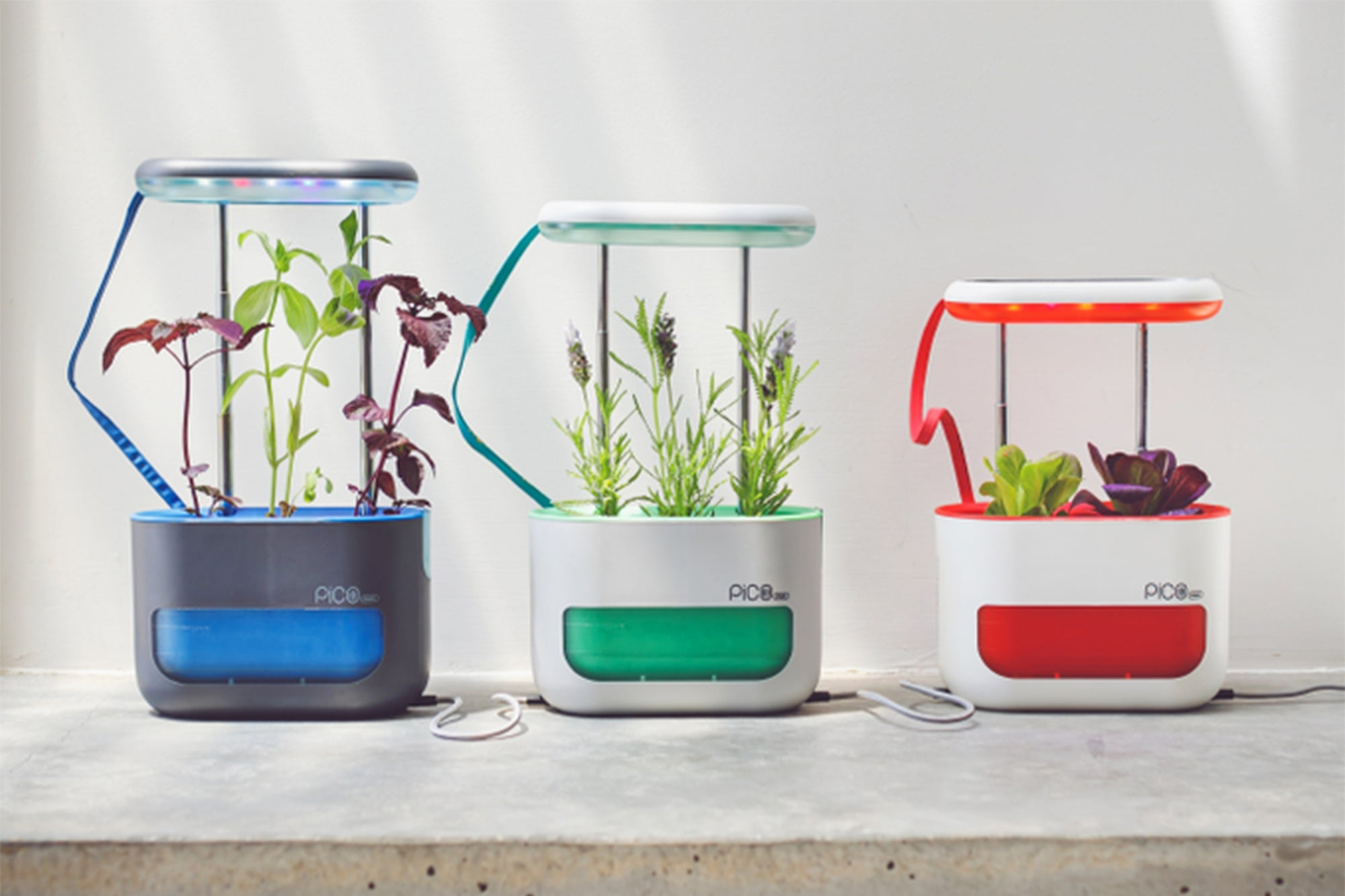 Pico Max Is a New Kind of Indoor Garden Kit for Herbs and More