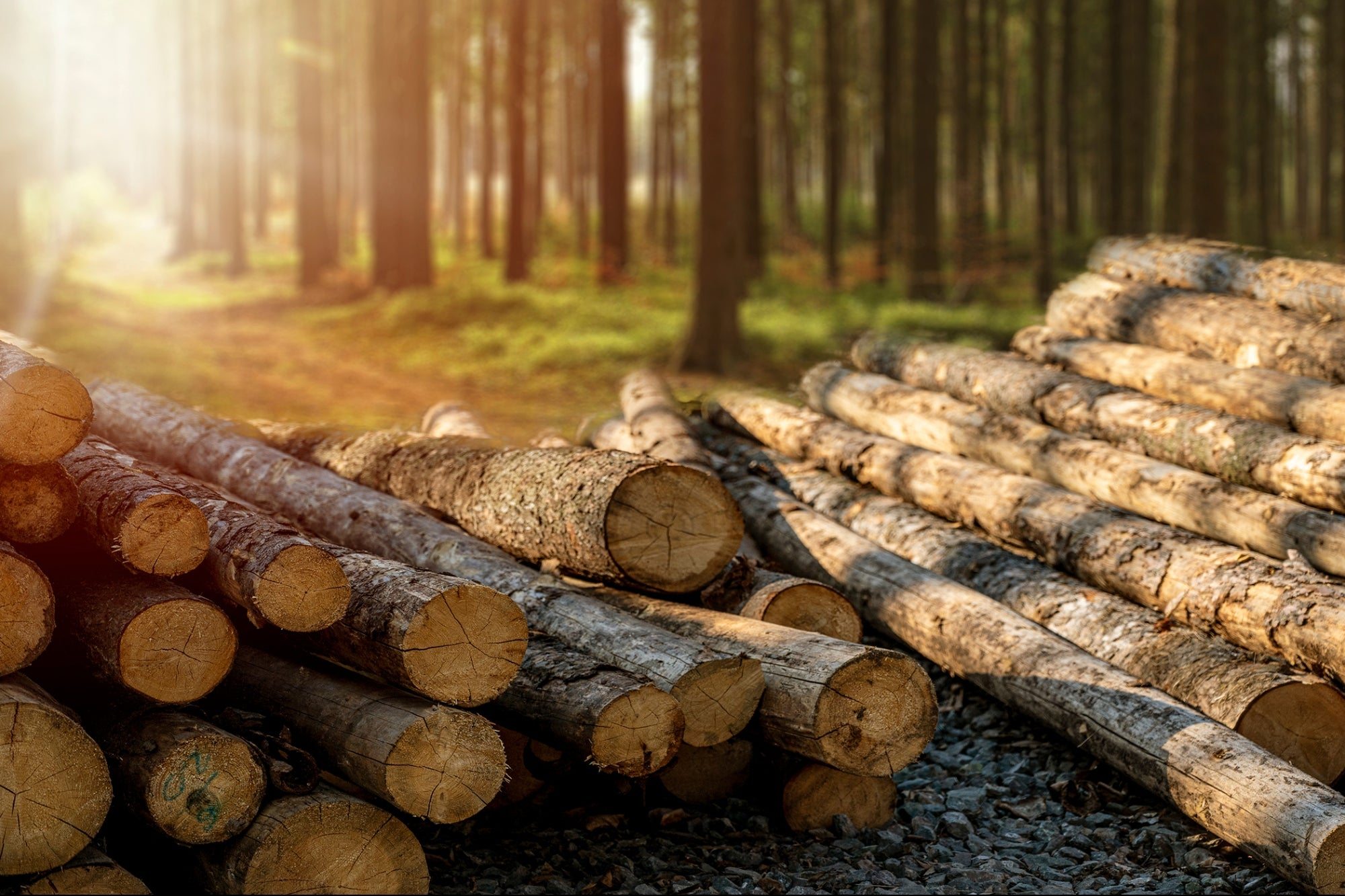 post-image-Exploding Lumber Prices May Be Good News for Hemp