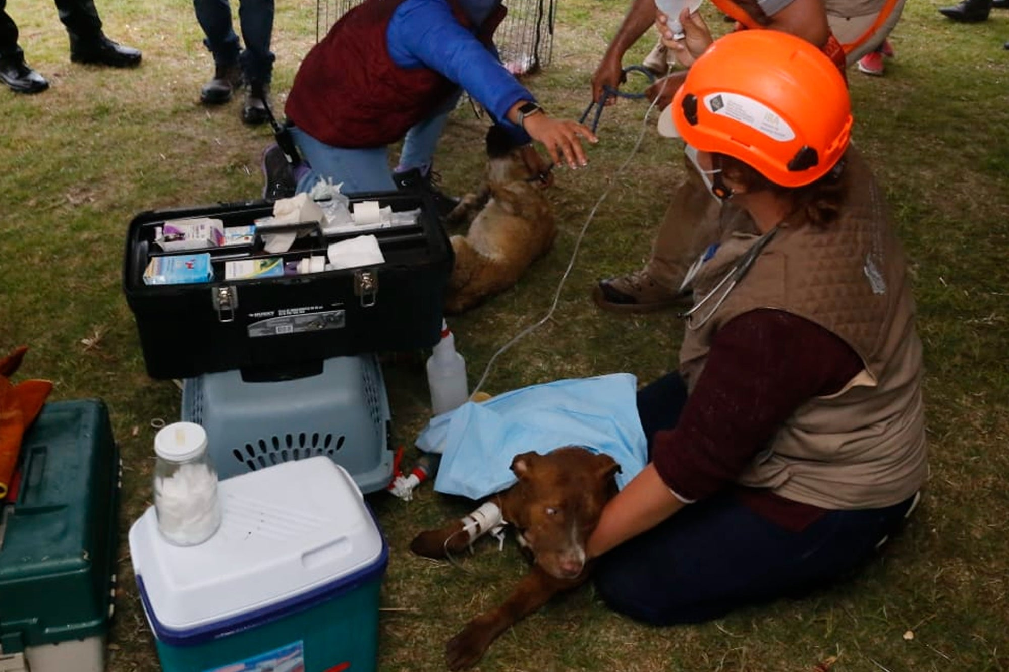 PHOTOS: They rescue the dogs Spay and Spike, who fell in the sinkhole of Puebla