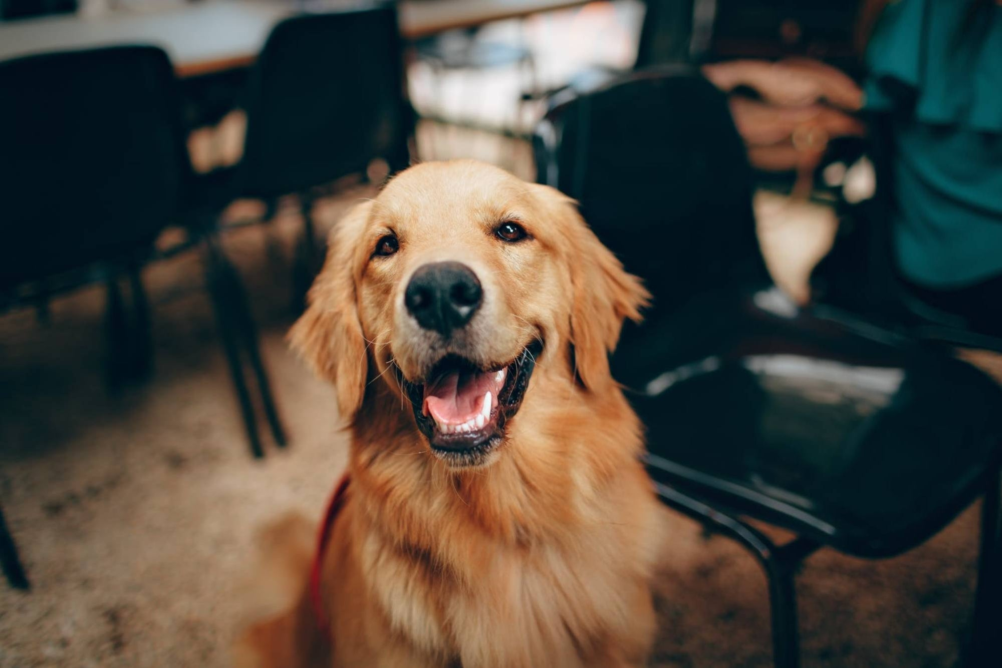 There is insurance for your pet and here are some reasons to consider it