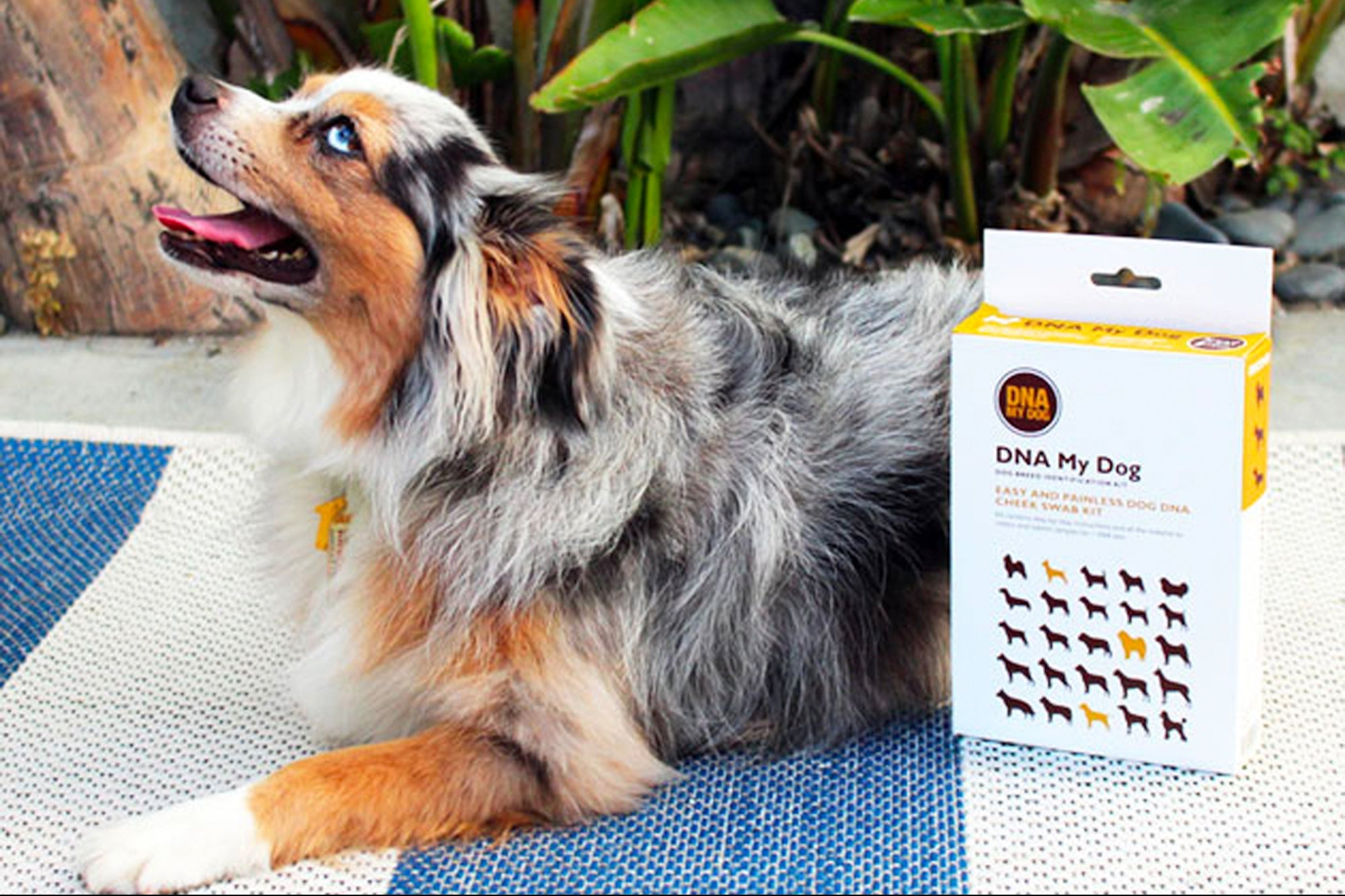 Save Money and Protect Your Dog With This Highly Rated Dog DNA Breed Identification Kit