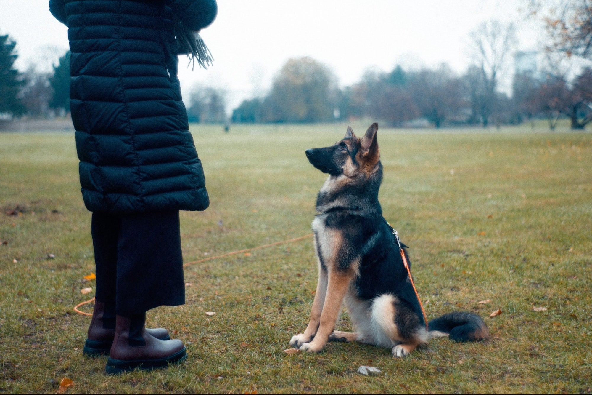 Learn About Your Dog's DNA and Get Hours of Obedience Training On-Demand