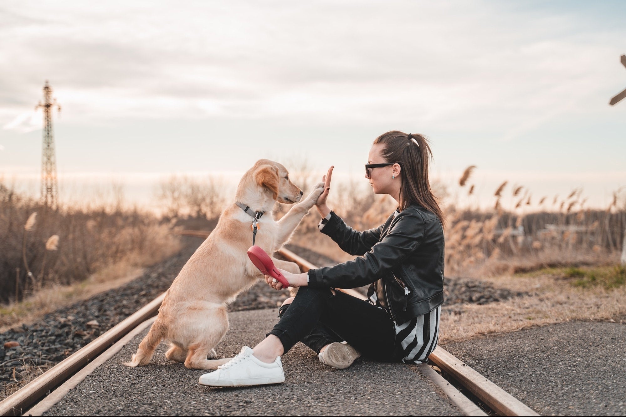 A Well-Trained Dog Can be an Entrepreneur's Best Friend