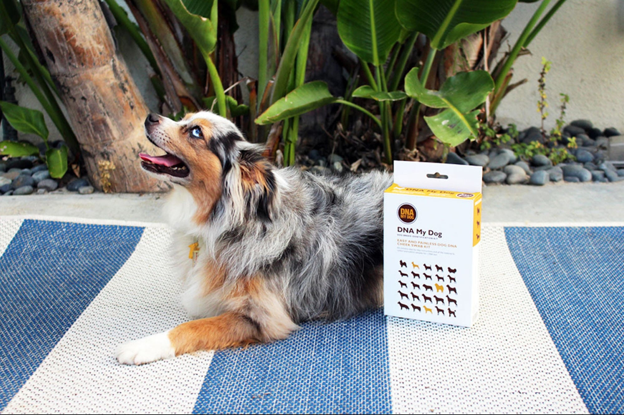 Knowing Your Dog's DNA Can Help You Be a Better Owner