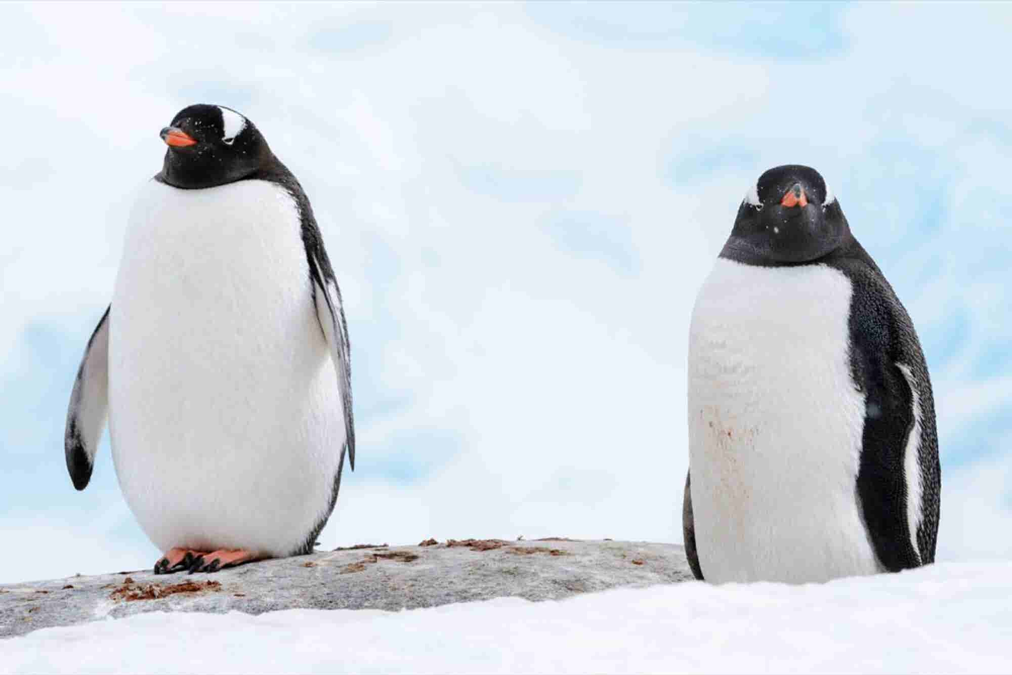 What You Need to Know About Google's Penguin 3.0