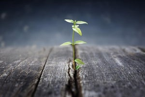 Consider These 10 Strategies When Preparing to Grow Your Company