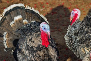 Don't Be a Turkey in How You Communicate Appreciation to Your Staff