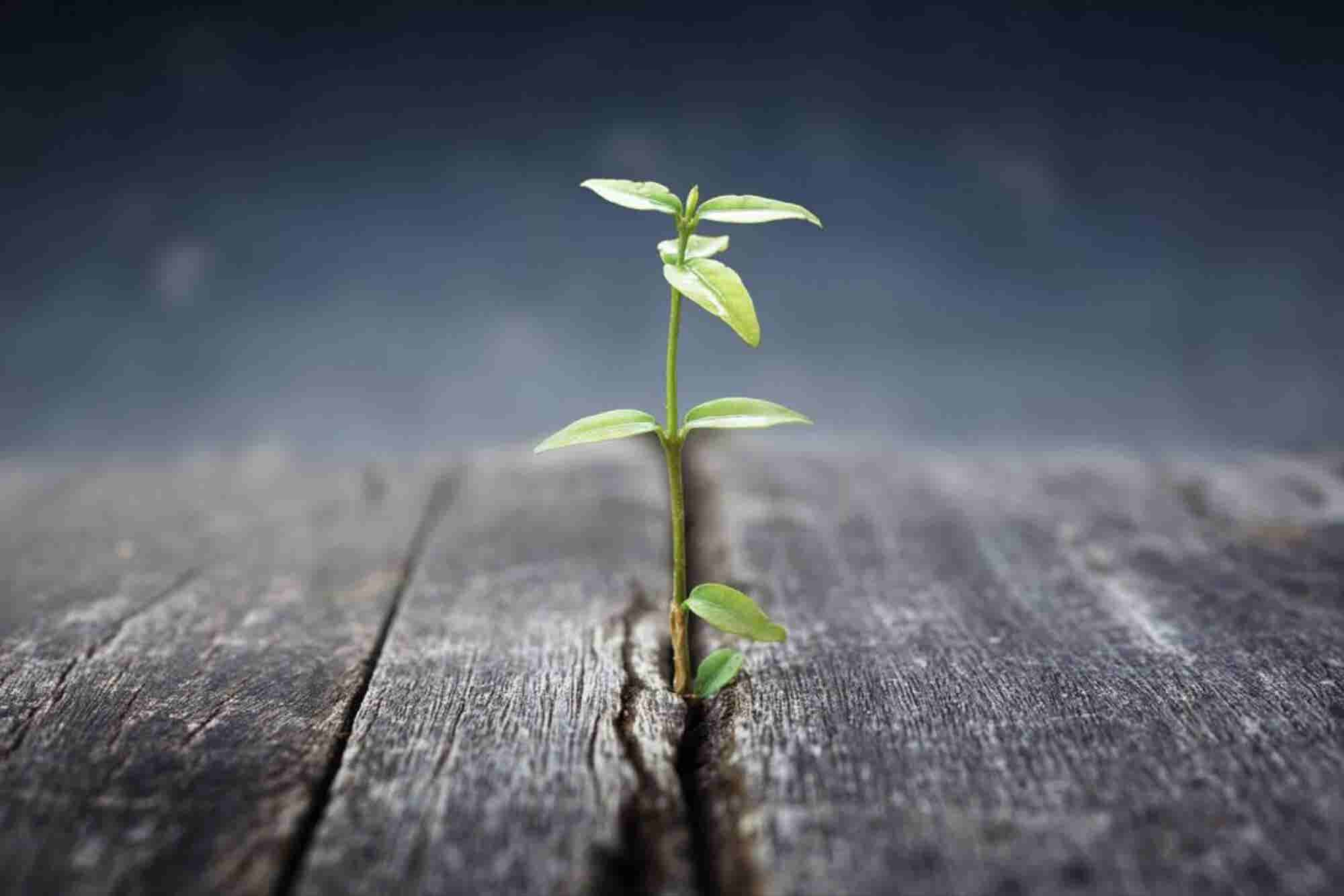 Tips When Raising The Seed: Startup Pitching