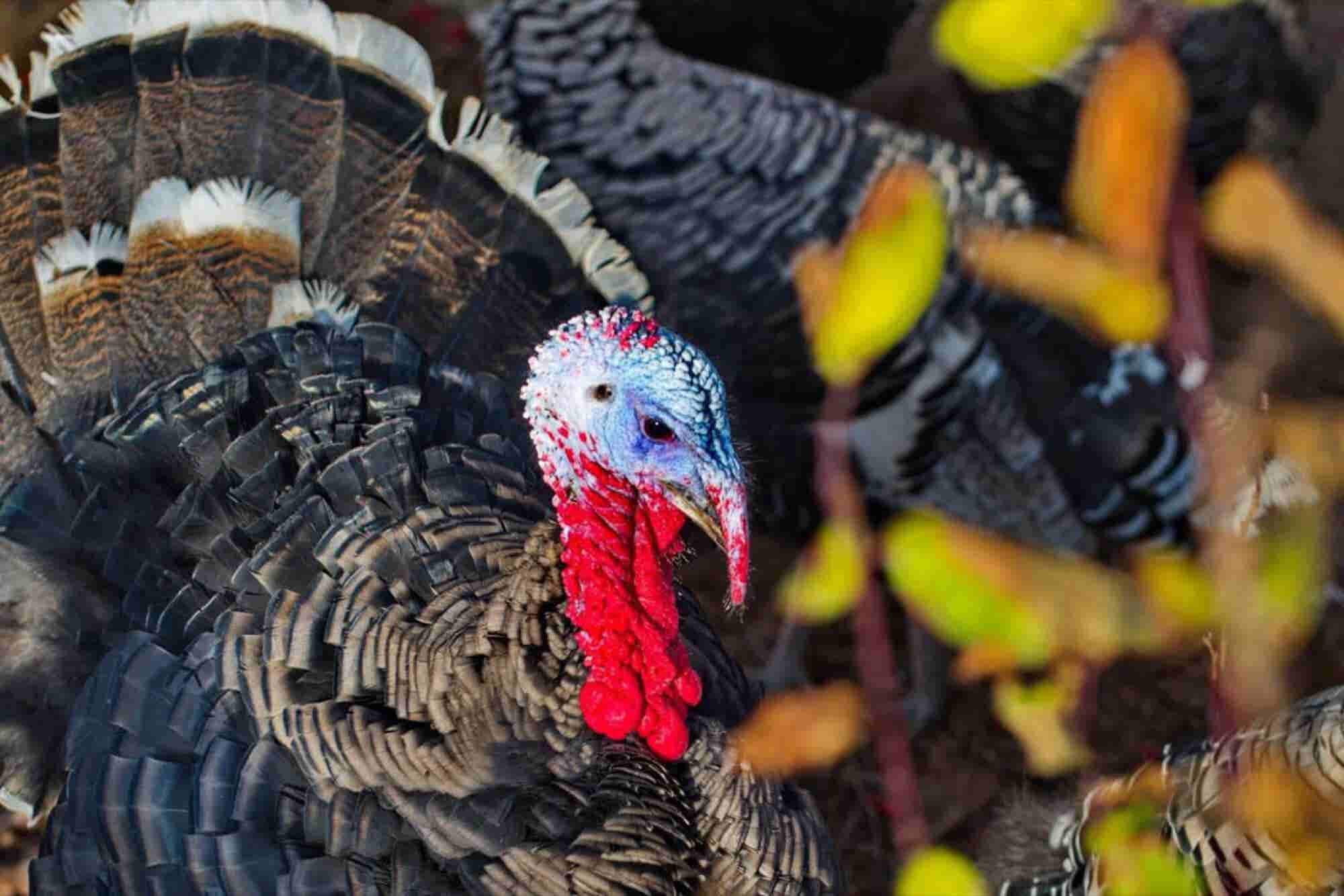 The Woman Who Sells Thanksgiving