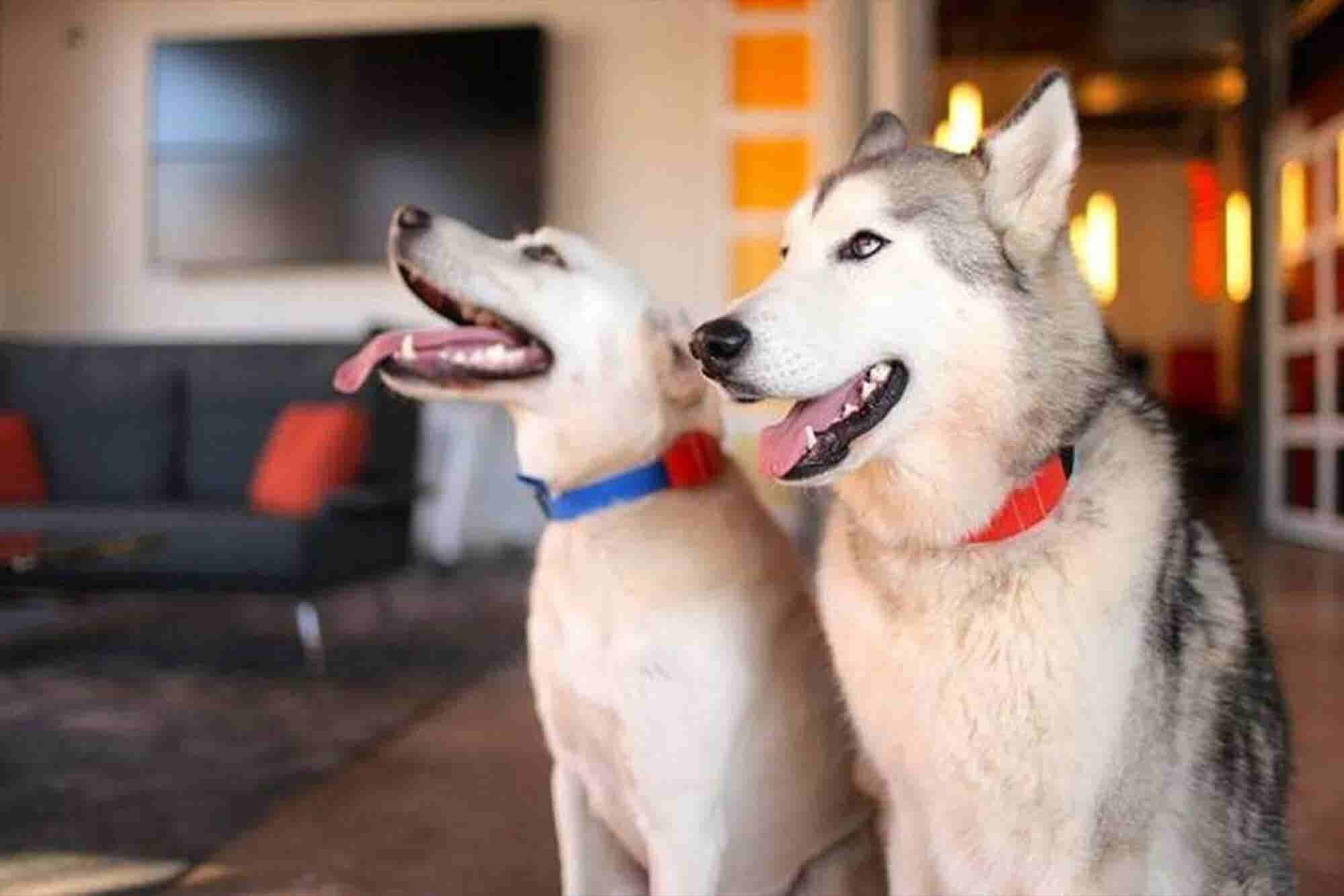 Here's a Dog Collar That Lets Humans Train Man's Best Friend From Anyw...