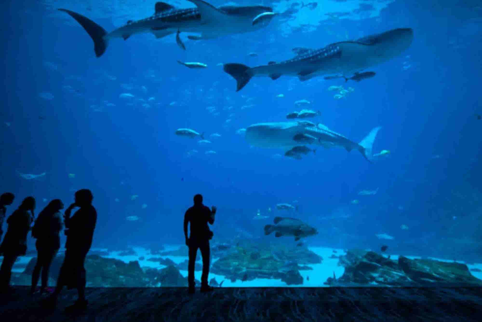 Staying Out of the Shark Tank: What To Consider When Choosing Investors