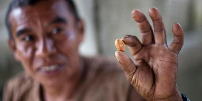 Sweet Deal: How One Company Found a New Way to Support Cacao Farmers