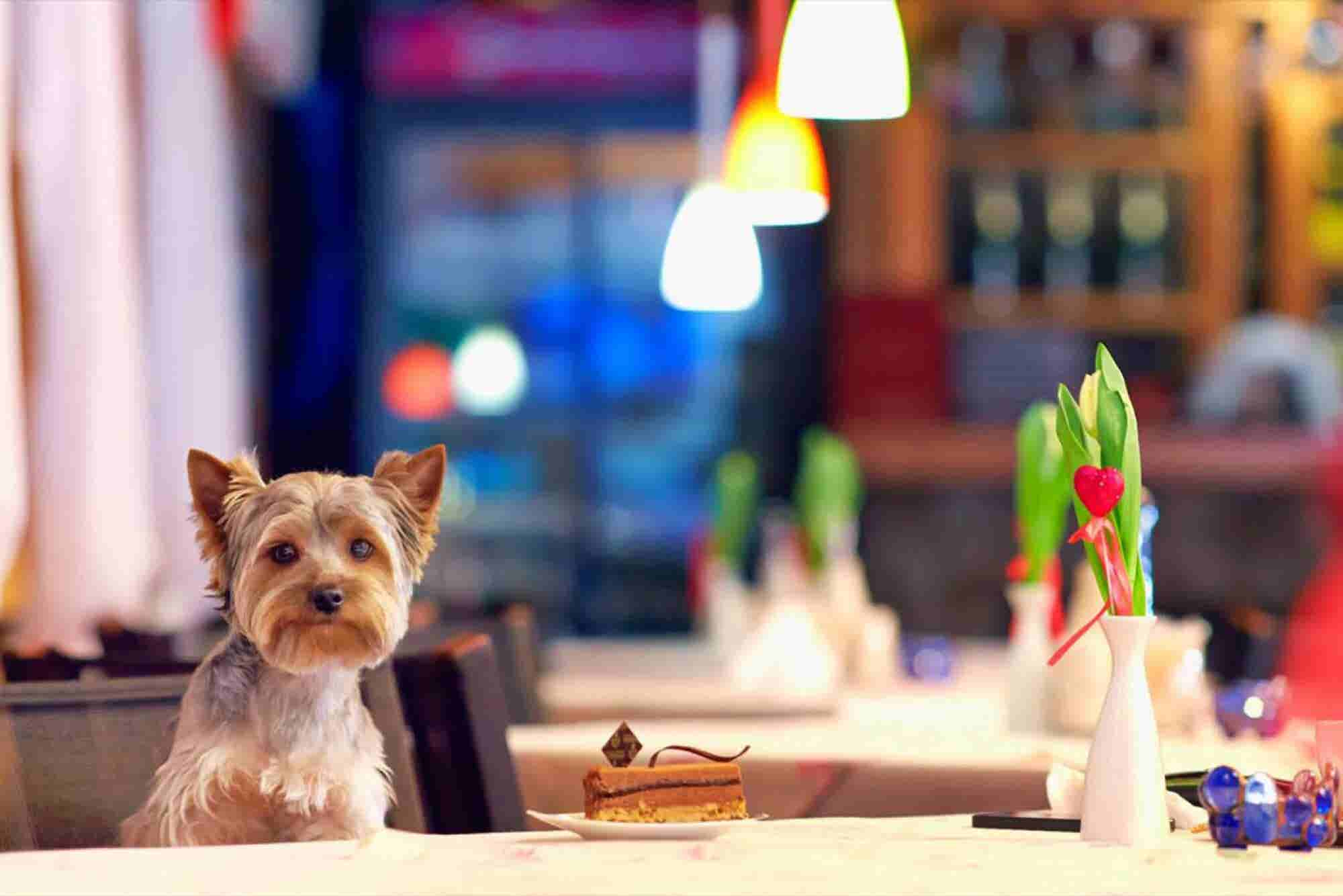 Forget Cat Cafes, It's Time for a Coffee Joint for Dogs