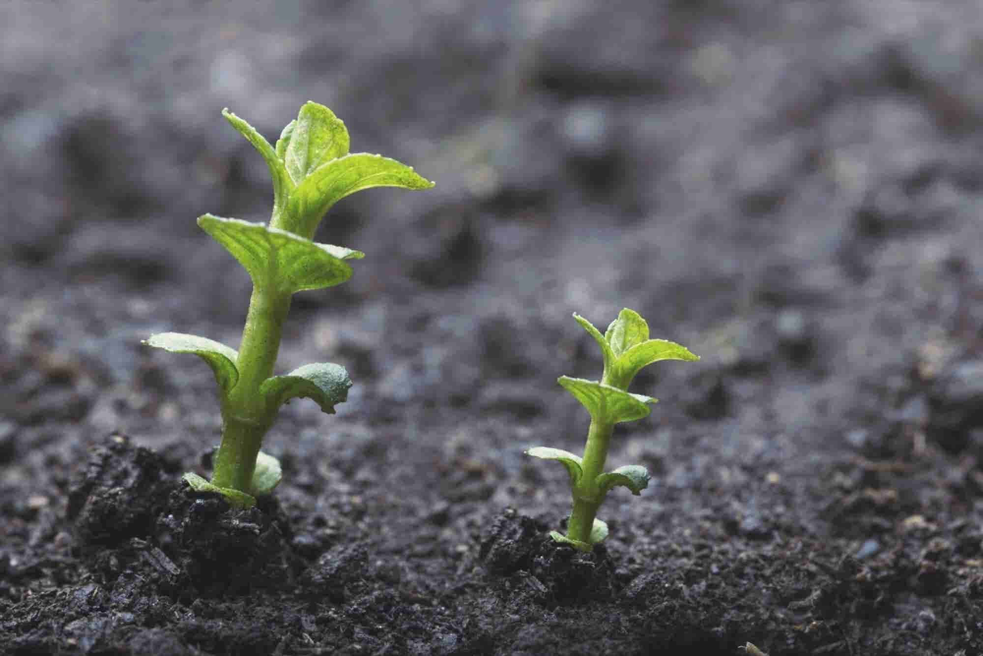 7 Strategies for Kicking Your Startup Into High Gear