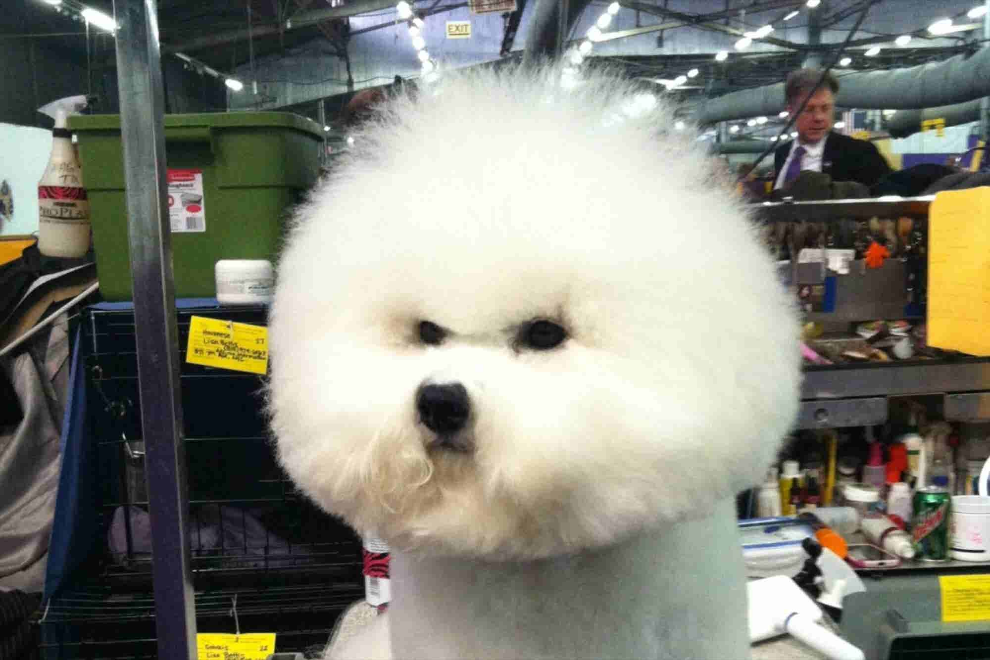 7 Lessons in Leadership From the Dogs of the Westminster Dog Show
