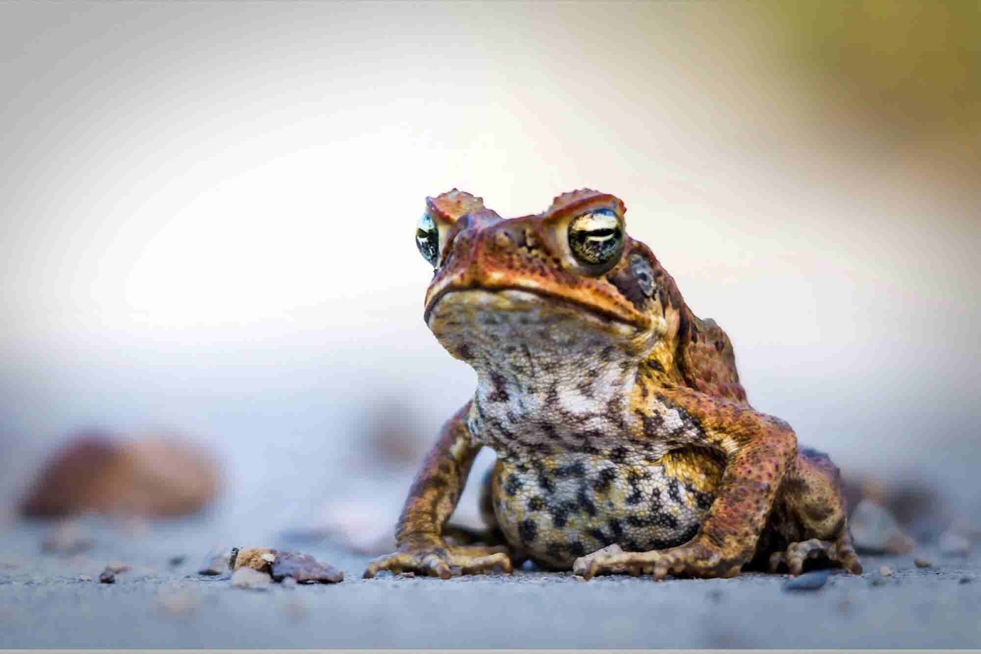 Don't Be a Networking Frog