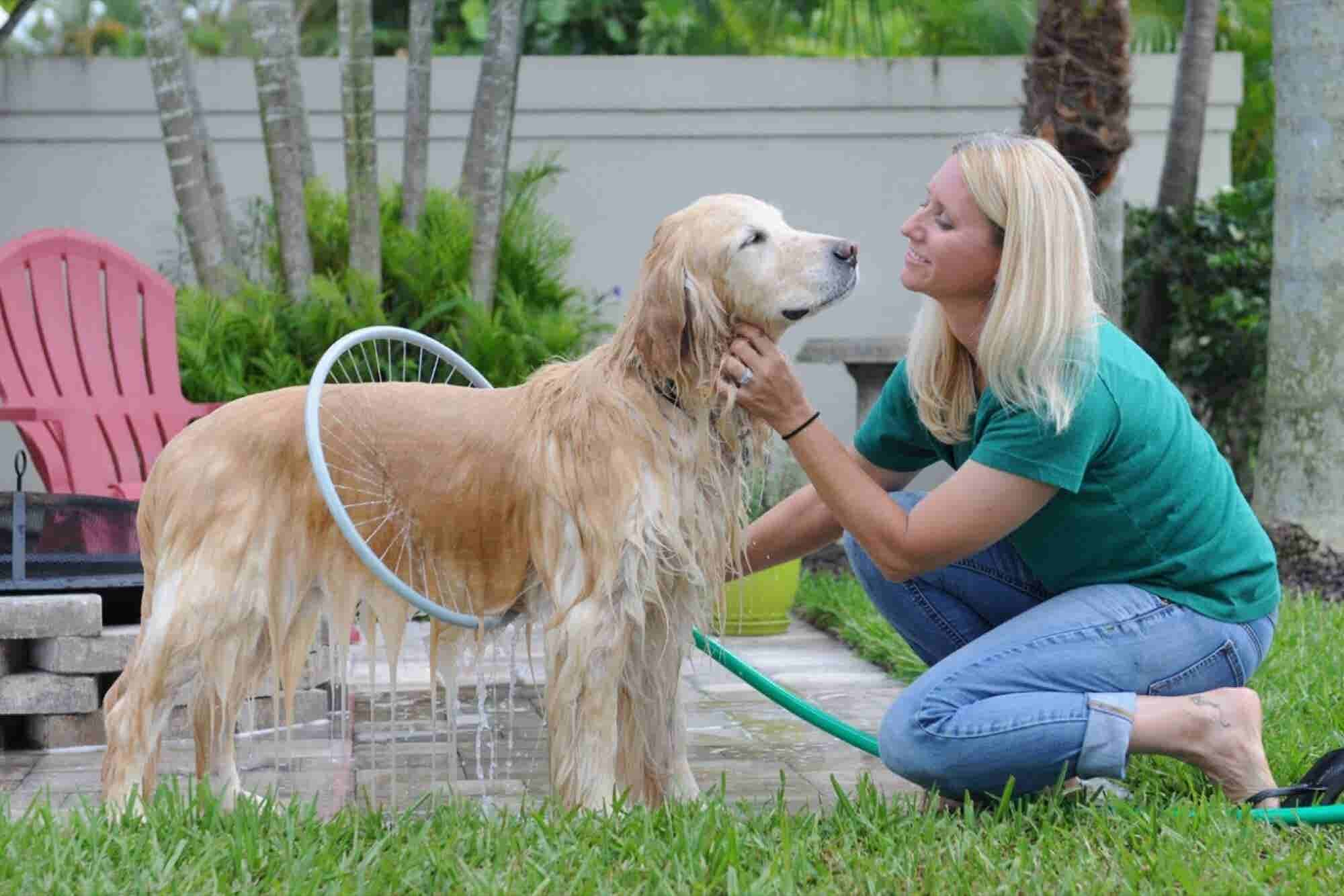 After Years of Struggle, Pet-Washer Inventor Celebrates Viral Video Success