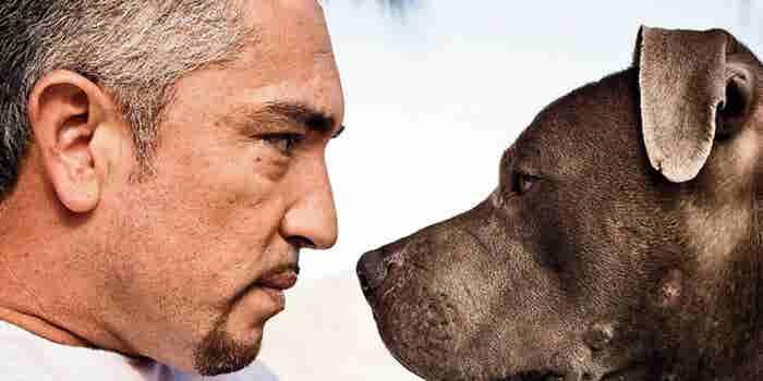 How Dog Whisperer Cesar Millan Learned New Tricks for His Website