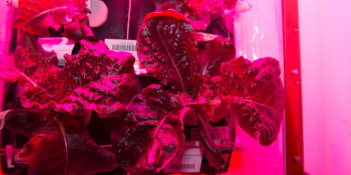 For the First Time Ever, NASA Astronauts Eat Vegetables Grown in Space