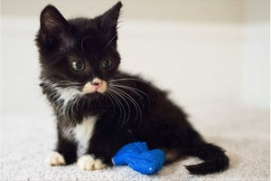 High School Students 3-D Printed a Custom Wheelchair to Help This Resilient Little Kitten