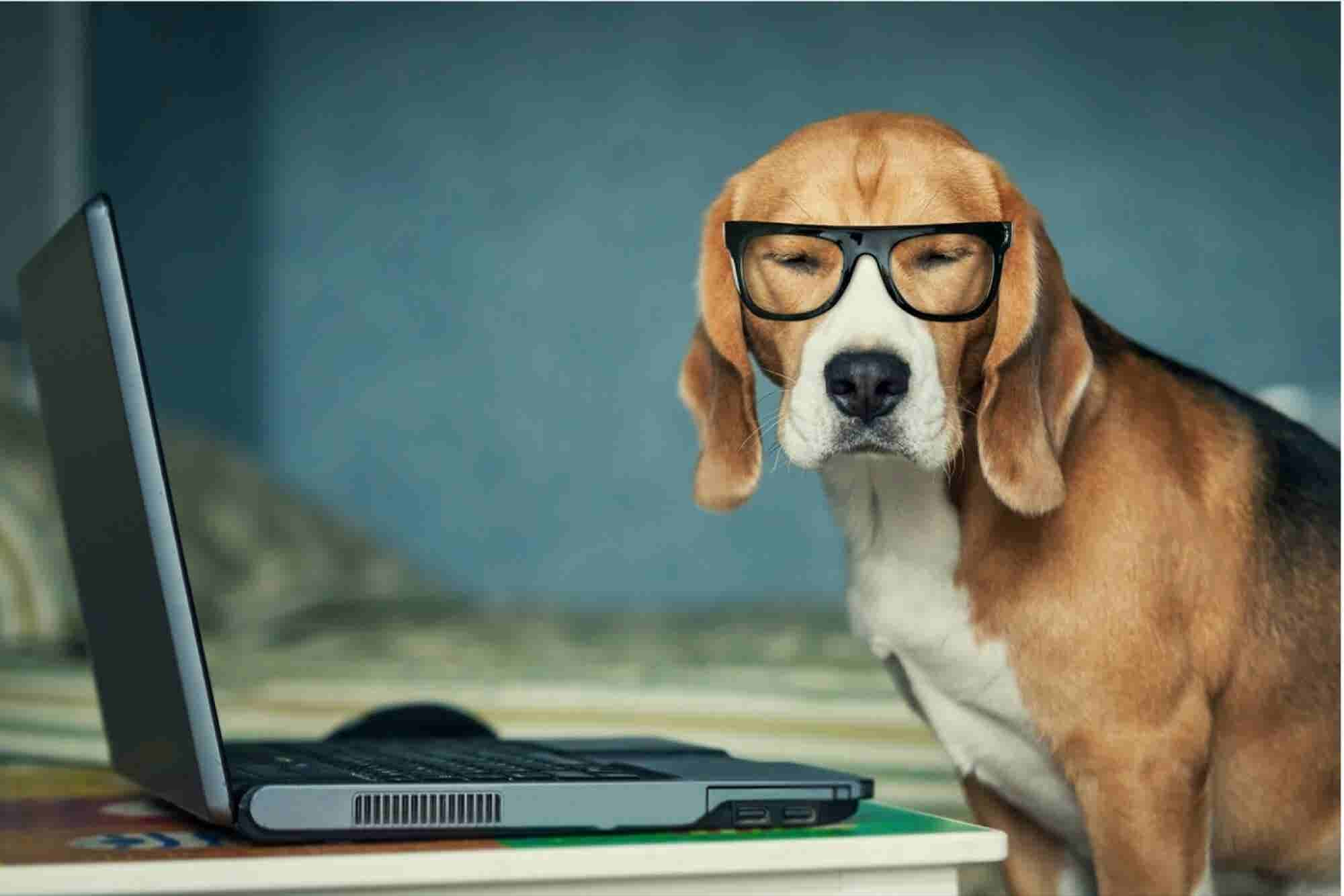 Why I Emailed a Dog