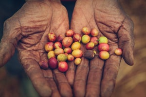 5 Universal Truths About Entrepreneurship Learned From Rwandan Coffee Farmers