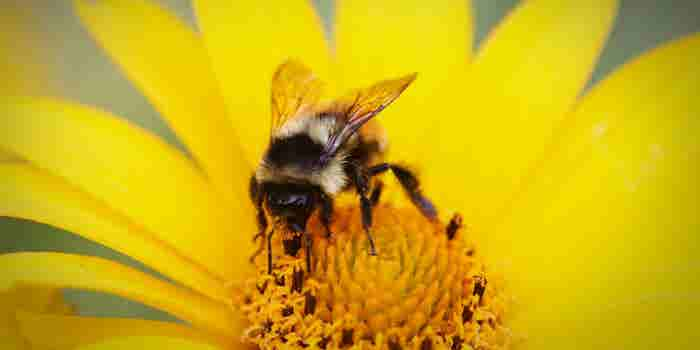 5 Things Worker Bees Can Learn From Actual Bees