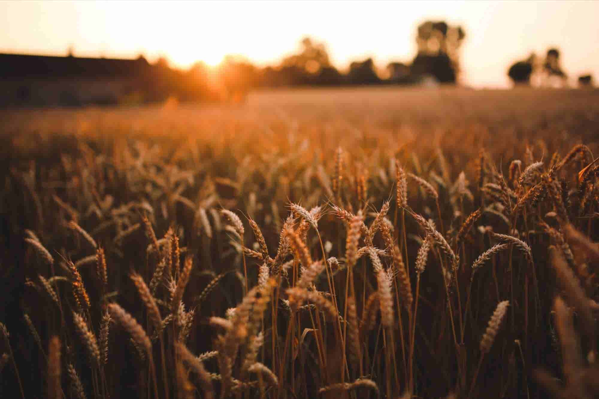 How Ag-Tech Ripened Into a Growing Market