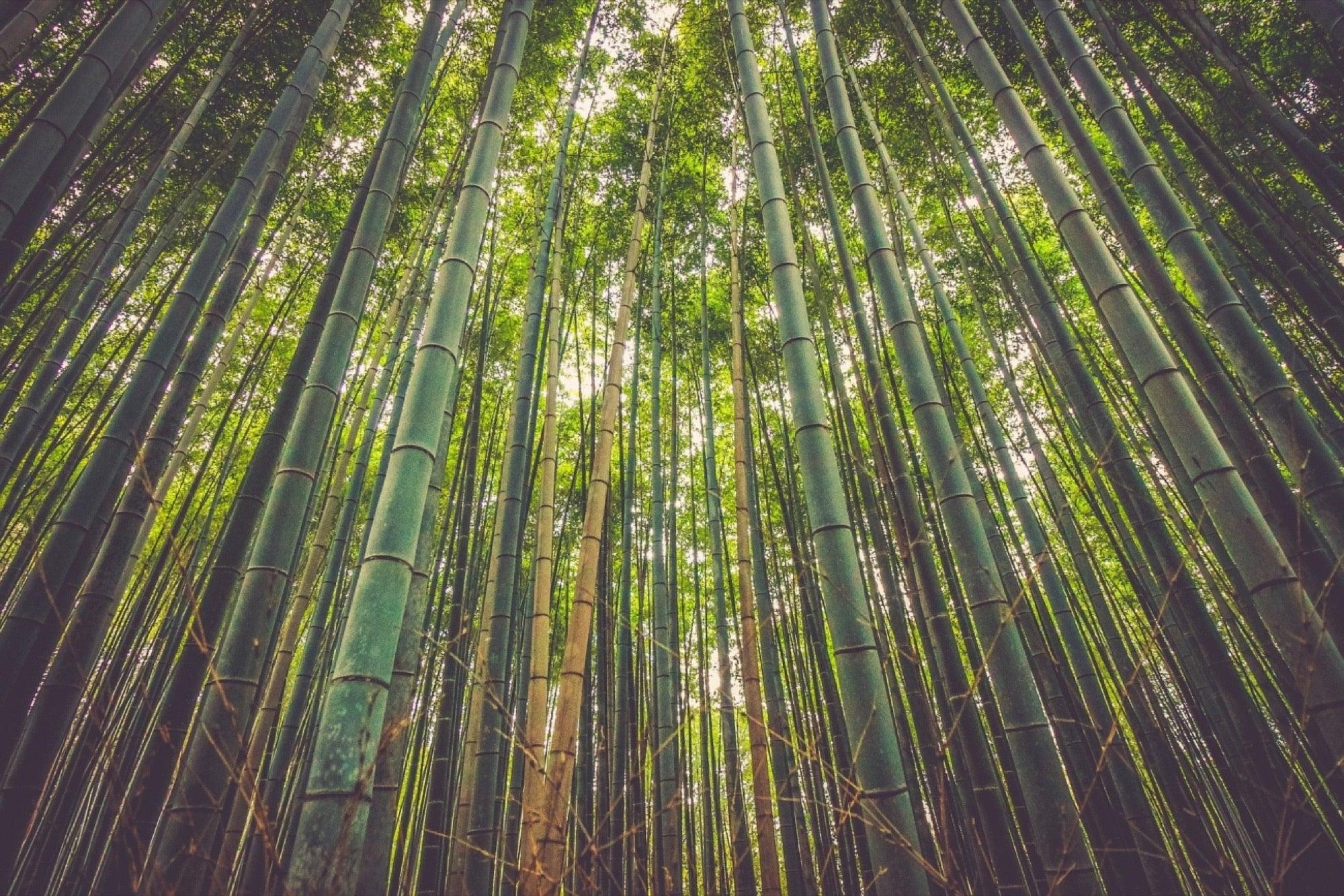 bamboo tree sentence