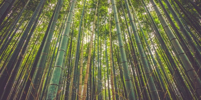 What An Entrepreneur Can Learn From A Bamboo Tree