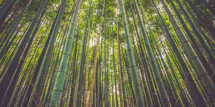 What an entrepreneur can learn from a bamboo tree…